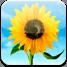 iOS 6 - Photostream (icon)