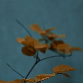 iPhone 5 Wallpaper: autumn