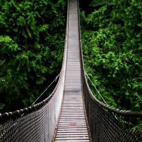 iPhone 5 Wallpaper (overig): forest bridge